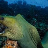 Séjour plongée à Bonaire