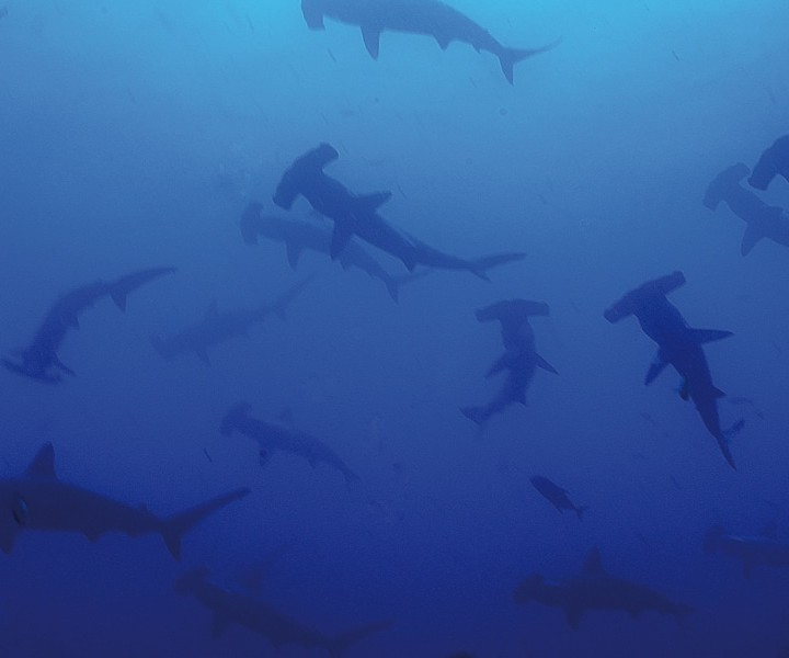 Croisière plongée au Costa Rica - île Cocos