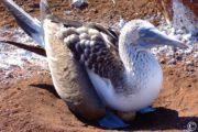 Croisière plongée aux Galápagos