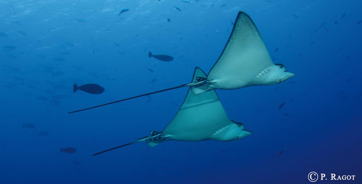 Séjour plongée en Micronésie - Palau