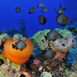 Vie coralienne