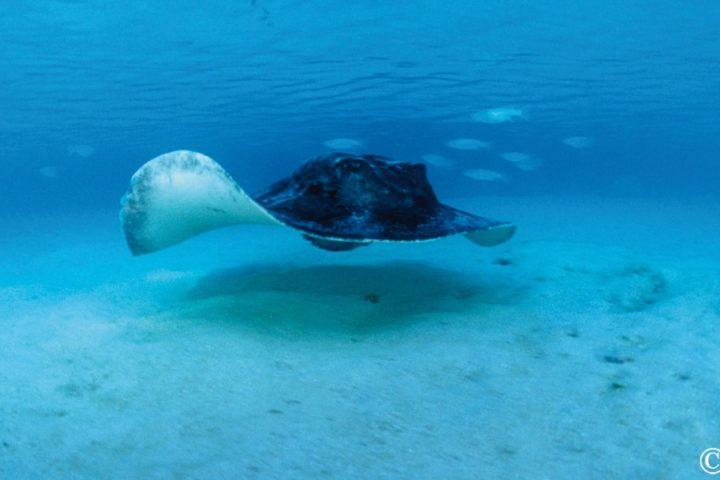 Croisière plongée aux Maldives