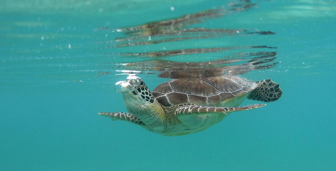 Séjour Plongée à Playa del Carmen