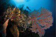 Séjour plongée à Selayar