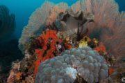 sejour plongee indonesie tomptika