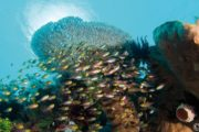 Séjour plongée au tompotika dive resort