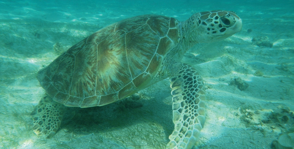 Séjour plongée à Mayotte