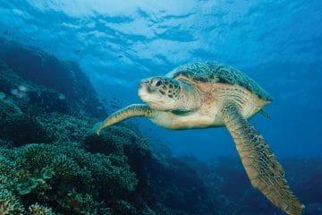 Séjour plongée à Manado