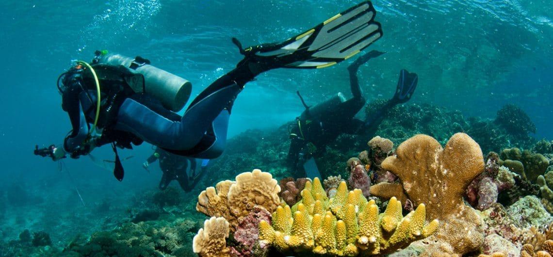 Voyages bio sous-marine