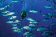 Croisière plongée à Socorro